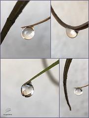Water pearls