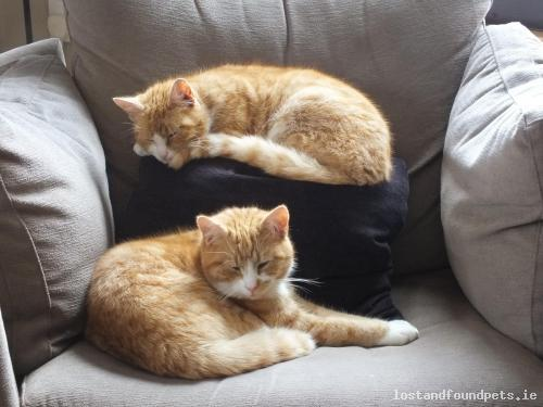 [Updated] Tue, Nov 15th, 2016 Lost Male Cat - Inch, Kilanerin, Wexford