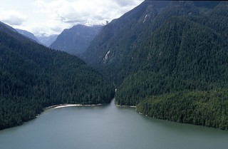 Public input sought on the Great Bear Rainforest
