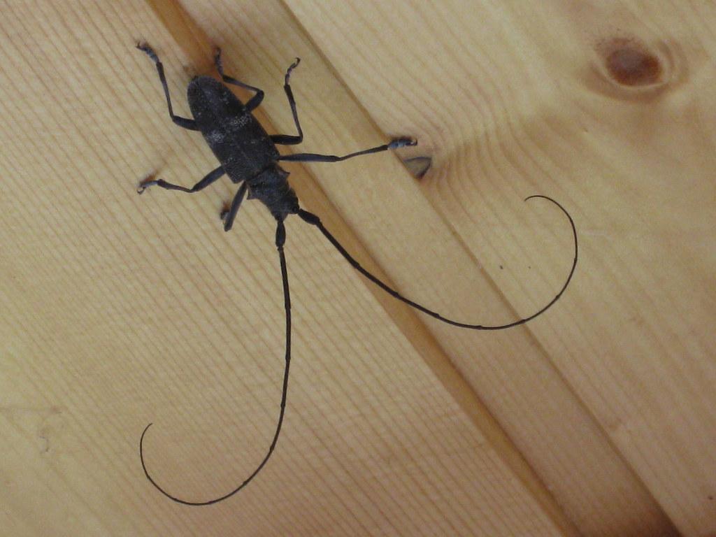Как сделать усики для таракана