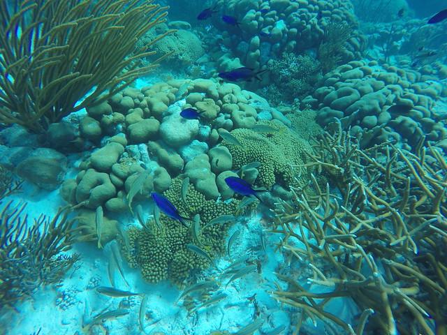 Underwater Bonaire
