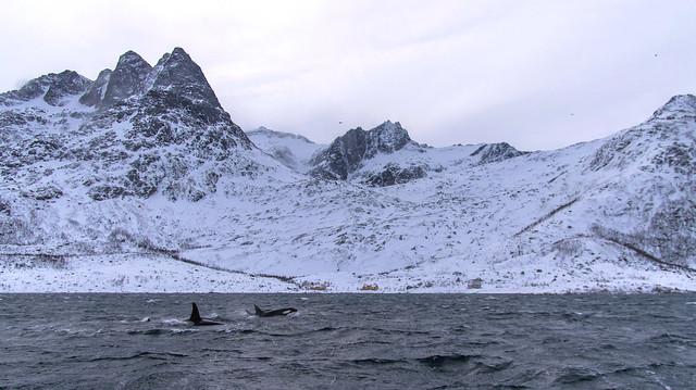 Orca fins mimicking the, Pentax K-5, smc PENTAX-DA* 16-50mm F2.8 ED AL [IF] SDM (SDM unused)