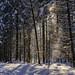 Schnee staubt von den Bäumen by Helmut Reichelt