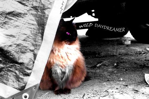 wild daydreamer