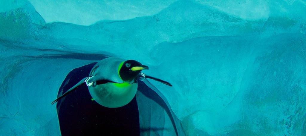 Penguin_9