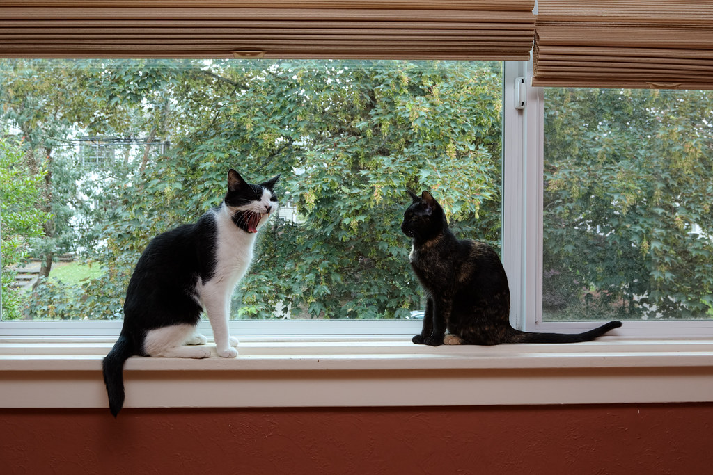 Our cats Boo and Trixie watch the neighborhood through one of our picture windows