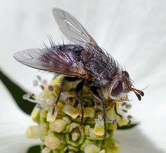 Fly--IMG_7214