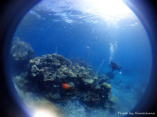 きーぼー、サンゴと小魚の群れに癒やされるの巻w
