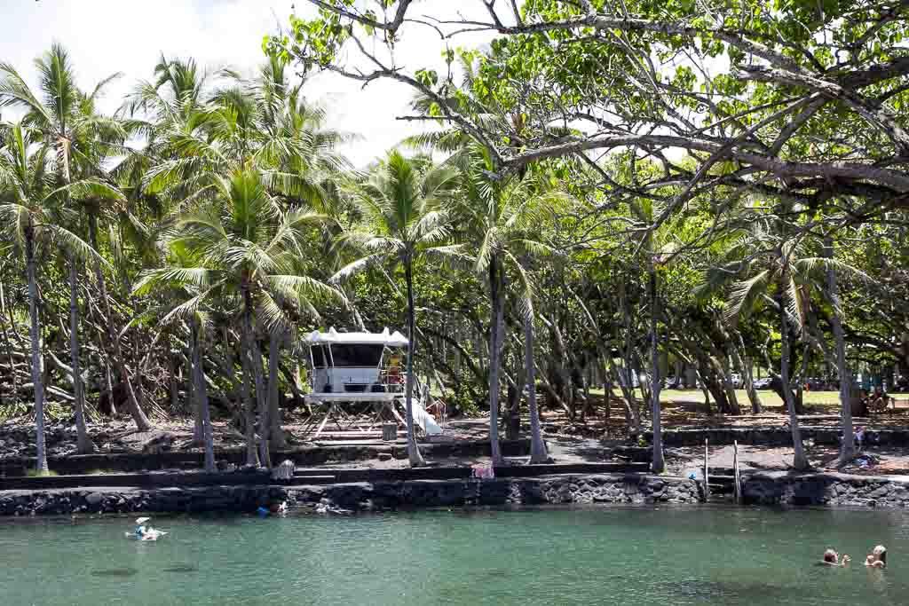 Mangbobaum hinterm Haus
