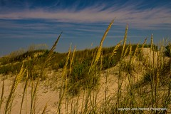Sea Oats at Lands End