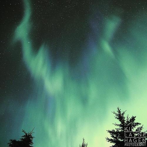 Blue and green aurora borealis #nature #stars #sky #night #longexposure #alberta #astrophotography #astro #amazinglongexposure #nightsky #star #nightimages #cabin #canada #FramesCatcher #photo #yeg #photographer #fineart #landscape  #intothewild #KLH