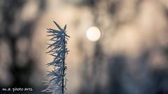 winterlich (3 von 7)