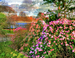 the botanic gardens is bursting into flower