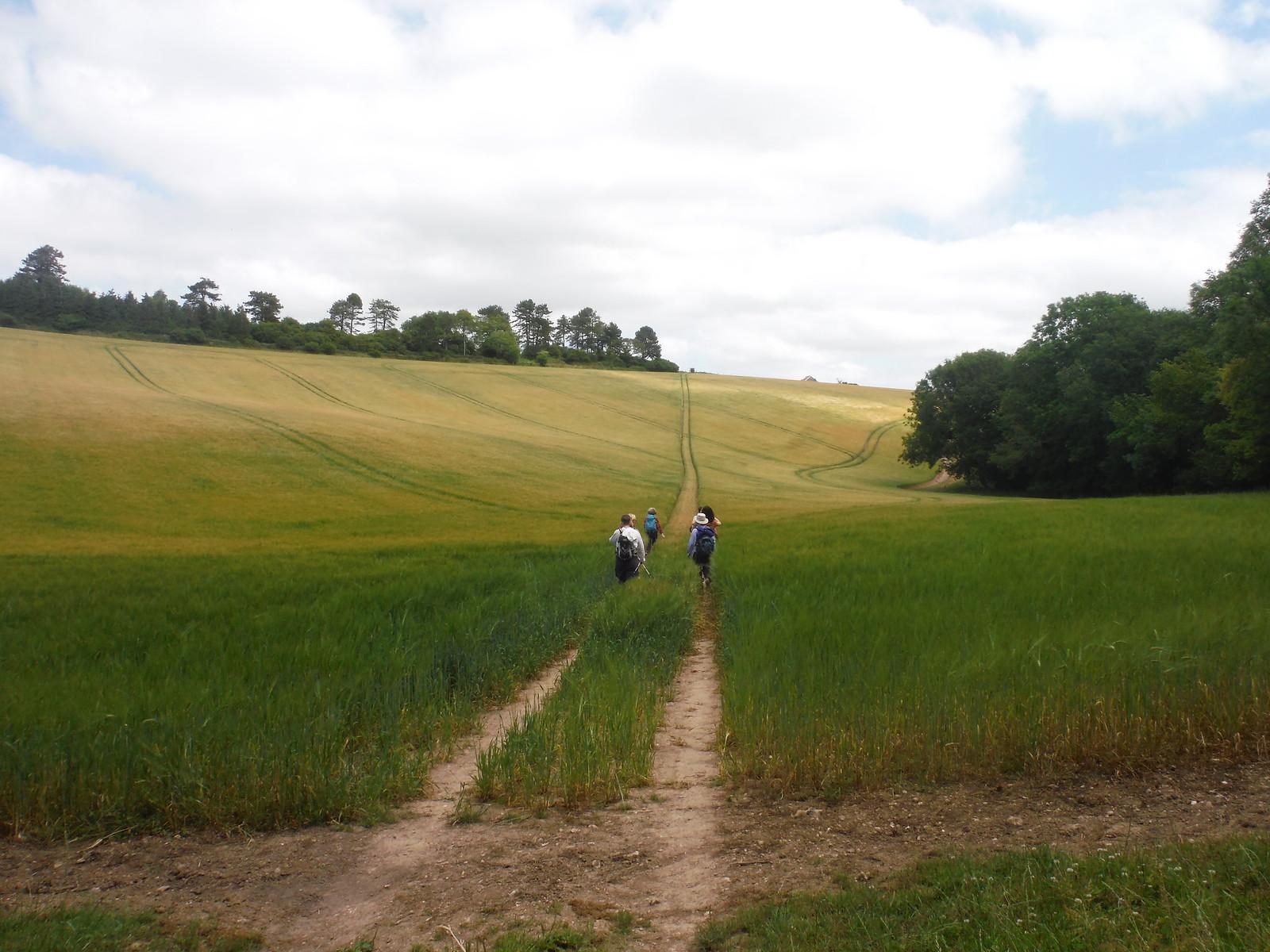 approaching Westburton Hill SWC Walk 217 Midhurst Way: Arundel to Midhurst