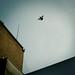 dream fly love by - e l i -