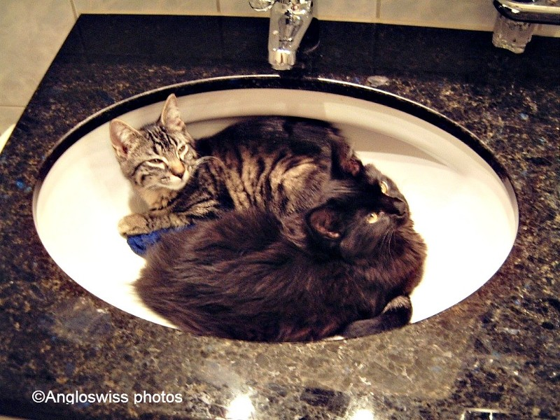 Tabby & Nera as kittens