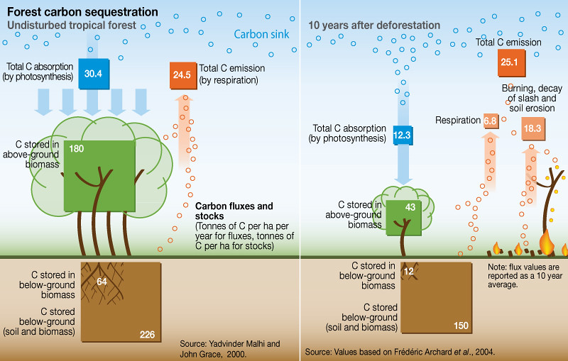 forest carbon sequestration