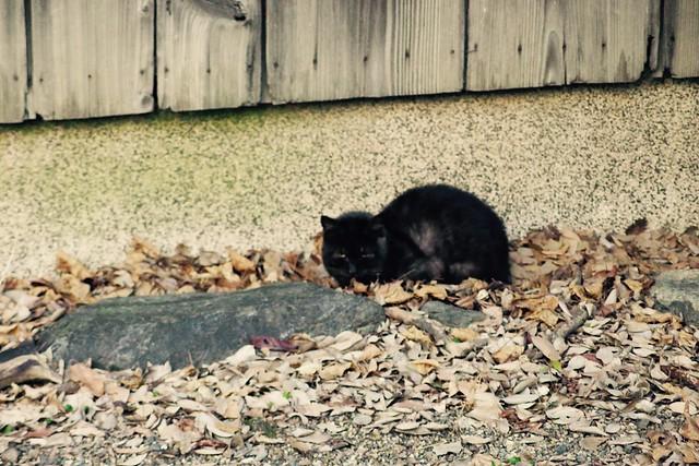 Today's Cat@2017-02-27