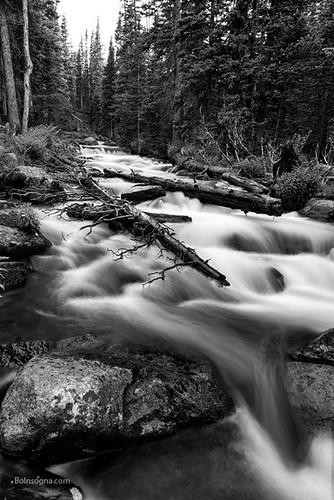 stream creek water flowing forest wilderness backcountry peaceful insogna monochrome fineart blackwhite nature landscapes colorado bouldercounty ward unitedstates