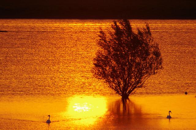 flood - Hochwasser