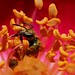 Packing on the pollen by 1ManWAC