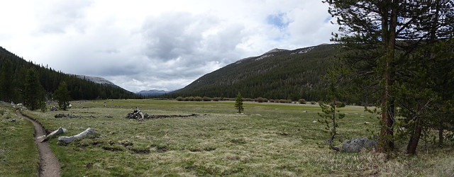 Lyell Canyon meadow, m934