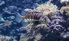 Tropen Aquarium Hagenbeck – Hamburg