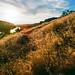 Sunset Over Field by matt_mangham