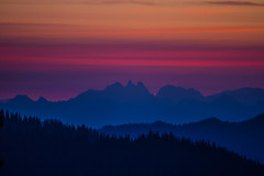 Shades of Dawn by West Leigh