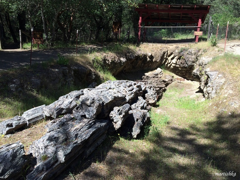 Calistoga_Petrified Forest (12)