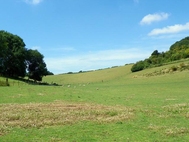 GOC Weston-Bygrave 019: Field