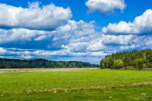green nature yellow clouds forest landscape spring cloudy sweden stockholm sony sunny bluesky blueskies manualfocus vallentuna naturreservat angarnsjöängen angarn minoltamd50mm mflens nex6 tommiehansen angarnsjöägennaturreservat northernstockholm