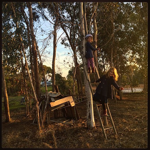 150/365 • the ladder that is now part of the cubby setup • #150_2015 #4yo #7yo #nature #cubby #boatyard #ladder #play #climbing