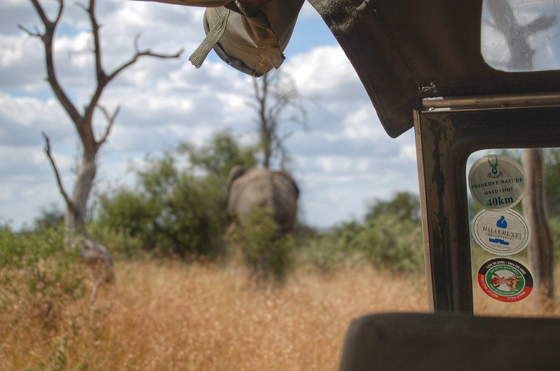 An elephant from the jeep