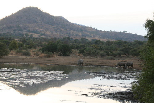 Sunset and rhinos
