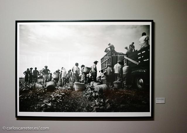 Centro de historias - Exposición Steve Schapiro