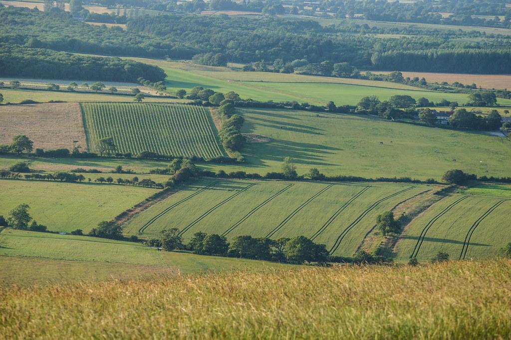 Fields, Devils Dyke