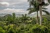 Valle de Vinales, Pinar del Rio , Cuba_-16 by raf hérédia