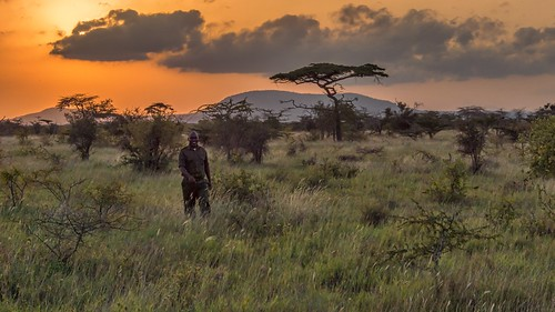 Ranger in the Bush by Geoff Livingston
