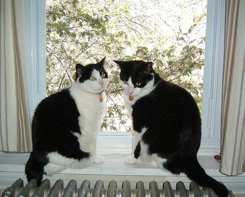 Springtime Window Kitties