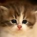 My Little Kitten. by Q8LT.net