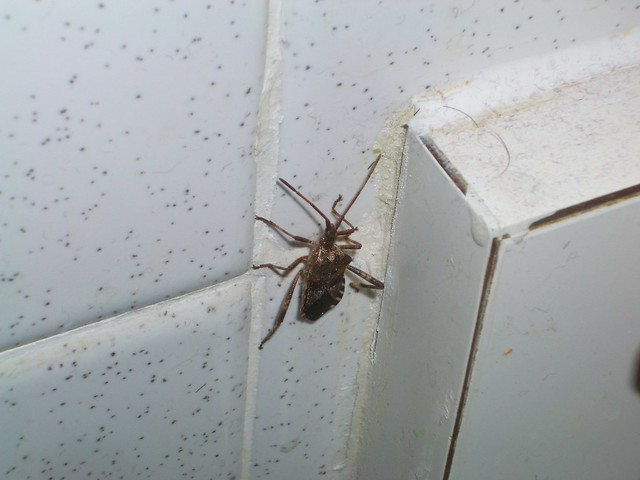 Bathroom Bug | Flickr - Photo Sharing!