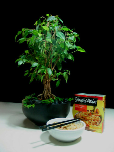 Ficus: Call it Bonsai if You Like