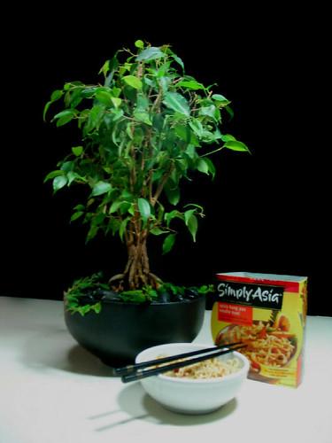 Ficus: Call it Bonsai if You Like