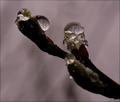 drops and refractions