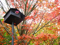 Tea Leaves, Mailbox