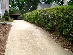 Driveway and hedge