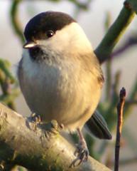 nightingale(0.0), junco(0.0), house sparrow(0.0), brambling(0.0), animal(1.0), sparrow(1.0), branch(1.0), fauna(1.0), finch(1.0), emberizidae(1.0), beak(1.0), bird(1.0), wildlife(1.0),