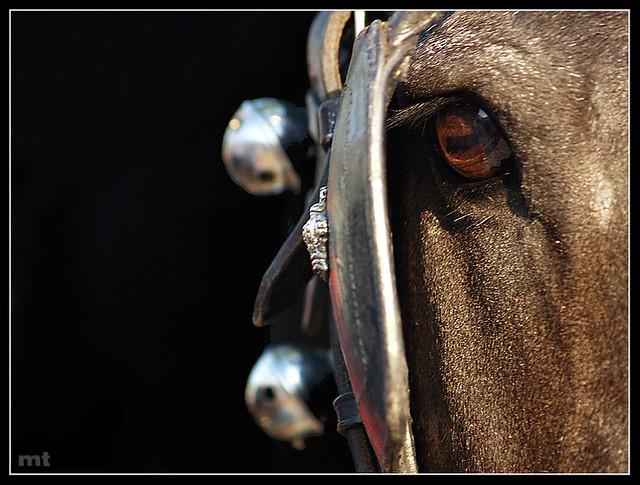 Así miran los caballos Andaluces...
