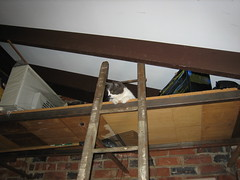 Spot can only climb *up* ladders